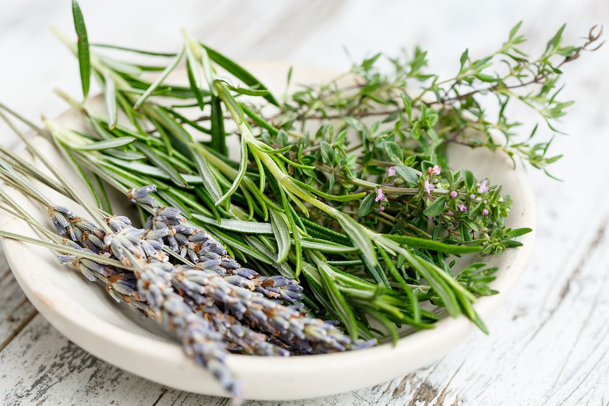Improving your digestive powers with bitter herbs & Enzymes for Life