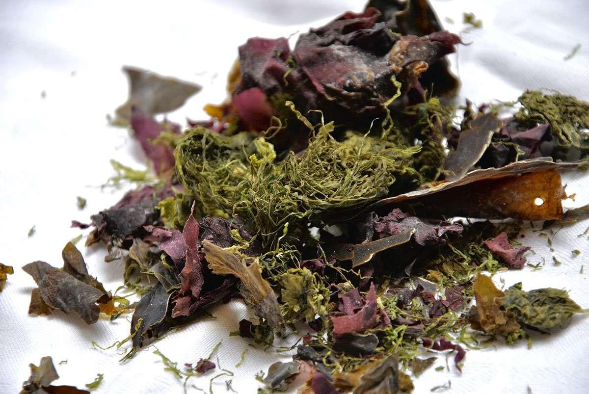 seaweed omega oils