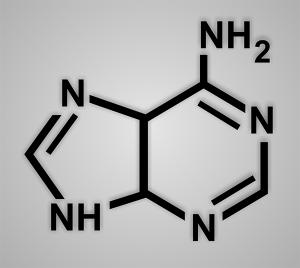 purines molecule