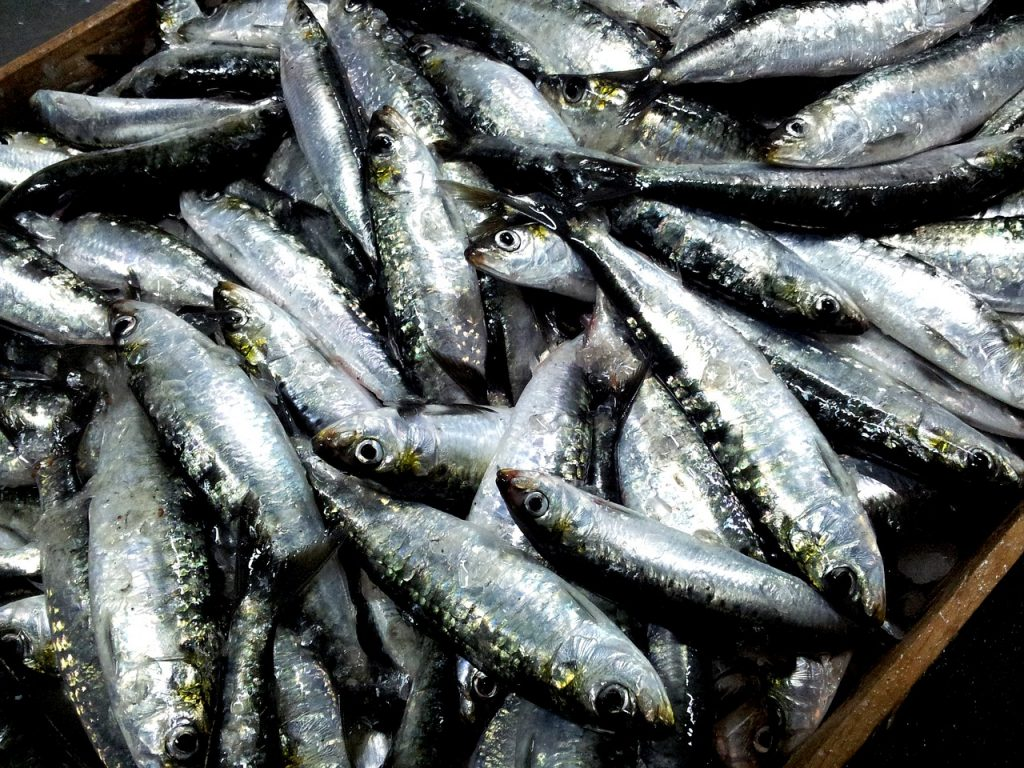 sardines are high in purines
